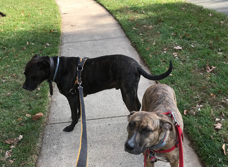 Pet Interview: Prince and Gia in Pennington