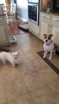 Simply Yours Concierge Pet Sitting