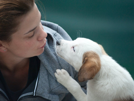 Professional Pet Sitters' Week