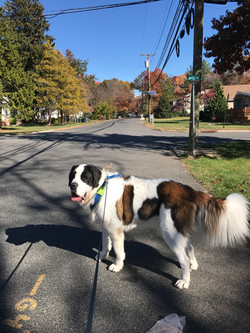 Dog Walking North Brunswick