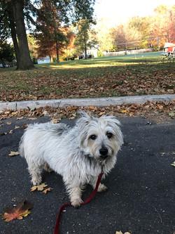 Dog Walking Princeton