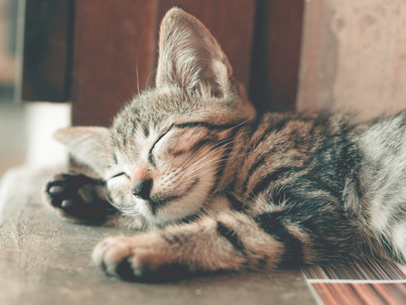 Why the bad rap for cats?