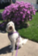 dog walking services in nj
