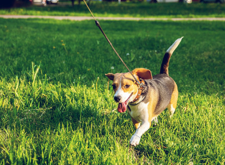 Dog Walking and Pet Sitting in Rocky Hill, Plainsboro, and Franklin Park