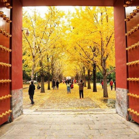มาเรียนภาษาจีนกับปลายฤดูใบไม้ร่วงที่ปักกิ่ง