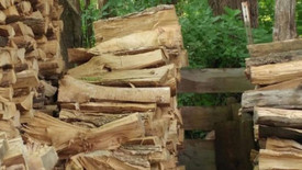 There Is A Cat Hiding In The Woodpile But Nobody Can See It