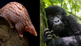 Science Reveals 15 of the Most Endangered Species on the Planet
