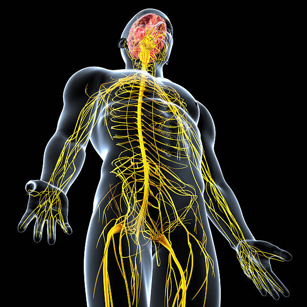 Neufit and the Nervous System