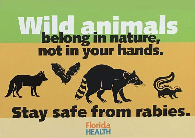 Cat tests positive for rabies in Titusville