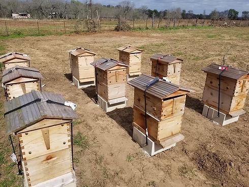 highline bees.JPG