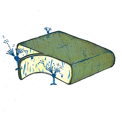 Raclette blauwgeaderd