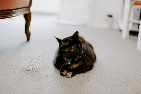 Missy Cat.jpg