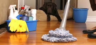 Clean Green Bristol mop floors