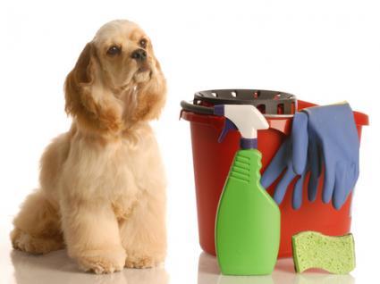Clean Green Bristol pet friendly
