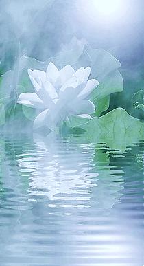 site internet Lotus-Meditation.png