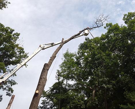 tree service nj, piscataway, watchung, warren