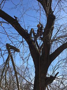 Climber in a tree.jpg