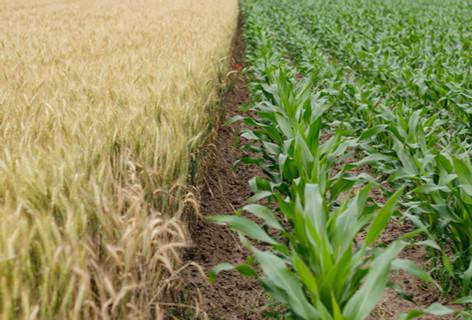 高科技农场 High-tech Agriculture Farming