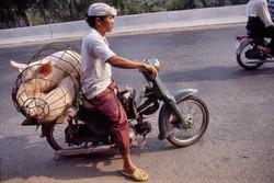 Cochon sur la moto Saigon 1996