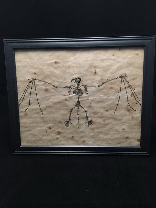 Framed Bat Anatomical Archive