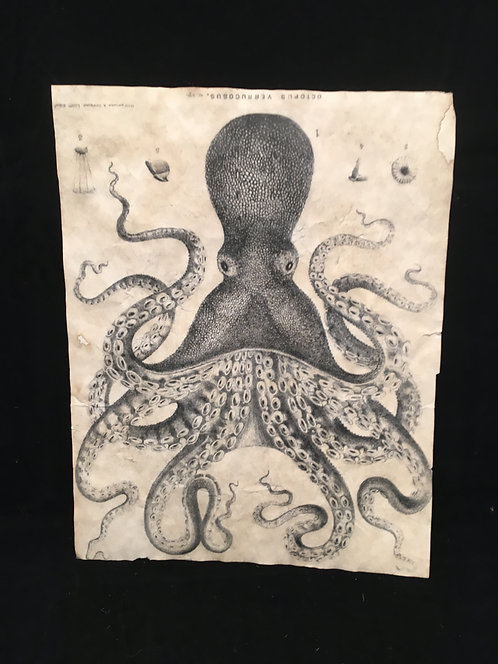 Octopus Archive