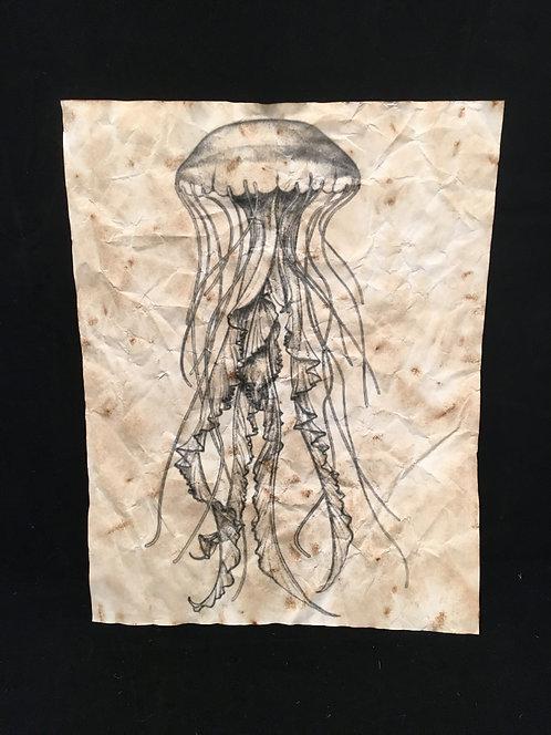Jellyfish Archive