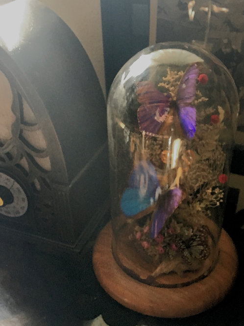 Large Glass Dome Butterfly Display