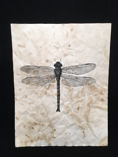 Dragonfly Archive