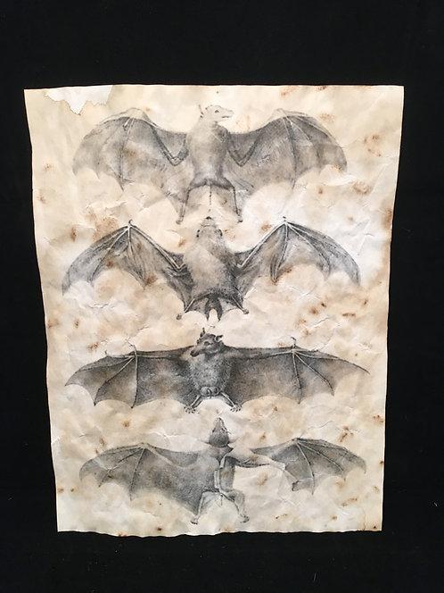 Bat Form Study Archive