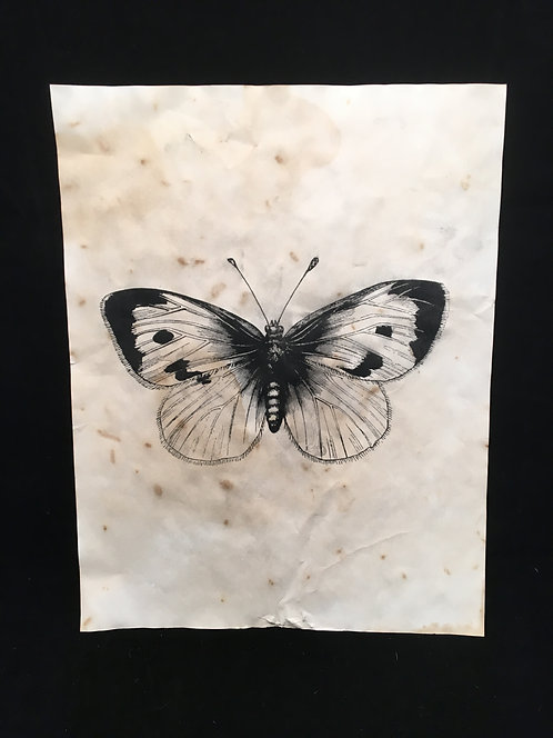 Butterfly Archive