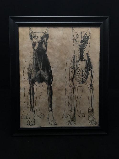 K9 Anatomical Archive