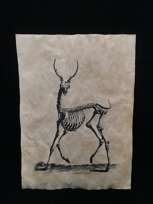 Deer Anatomical Archive