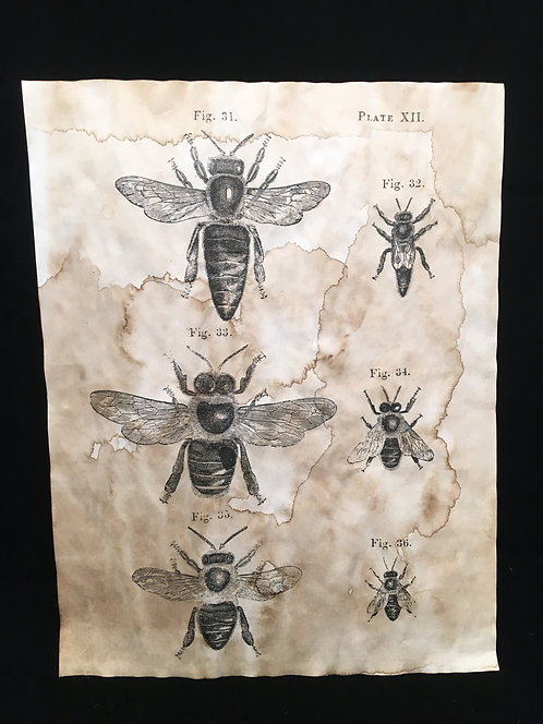 Bee Study Archive