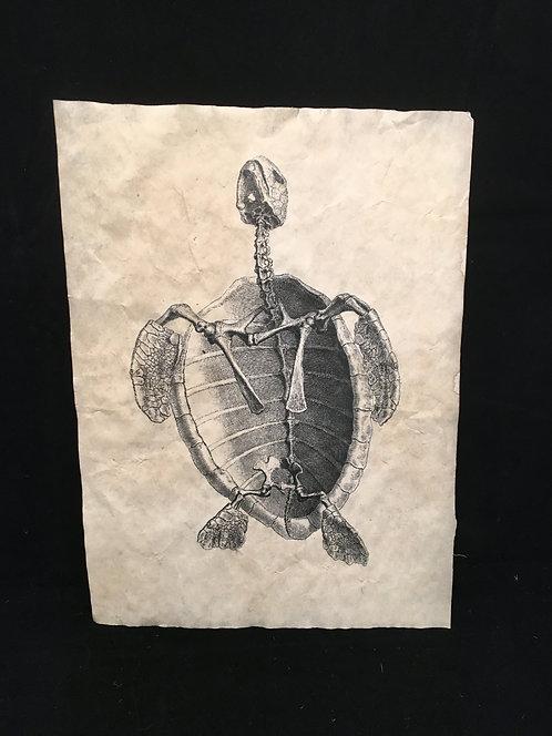 Sea Turtle Archive