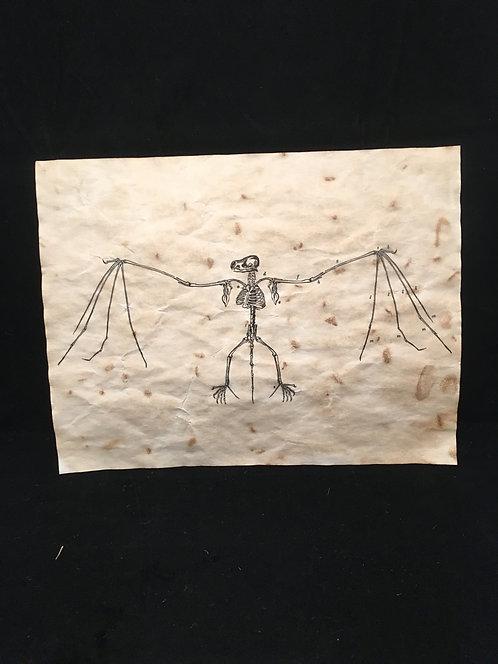 Bat Skeleton Archive