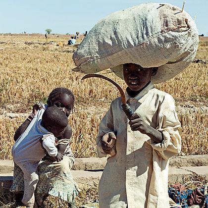 Enfants dans les rizières