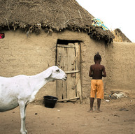 Mouton devant la case