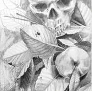 """""""The Skull and the Peach"""""""