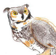 """Great Horned Owl II"""