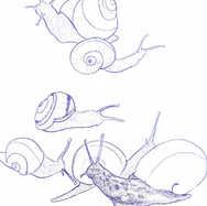 """""""Garden Snails"""""""