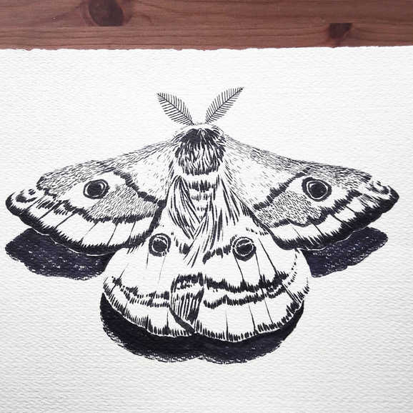 """""""Emporer Moth"""""""