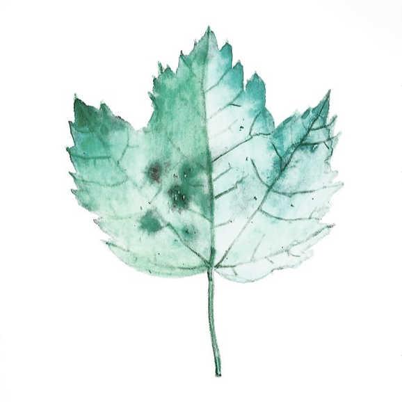 """Green Leaf"""