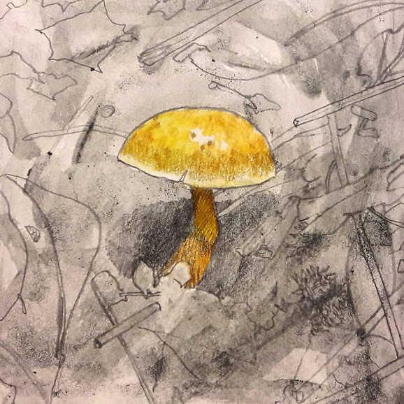 """""""Yellow Mushroom"""""""