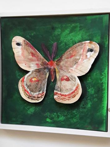 """""""Cecropia Moth"""""""
