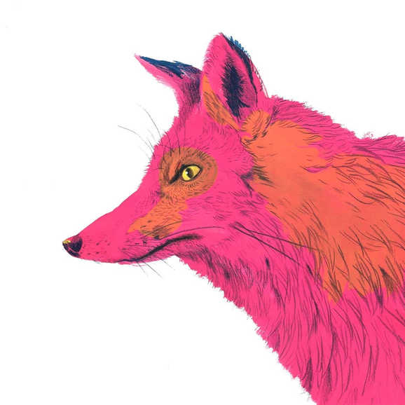 """""""Pink Coyote"""""""