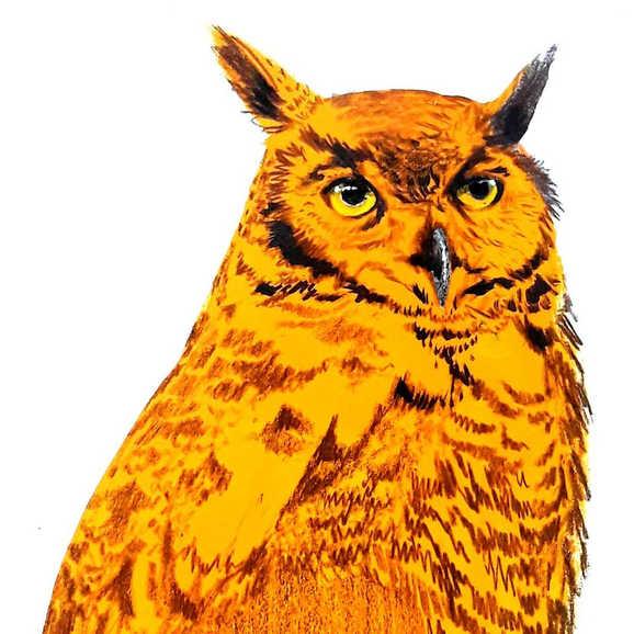 """""""Great Horned Owl"""""""