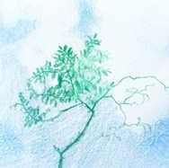 """""""Green Branch, Blue Sky"""""""