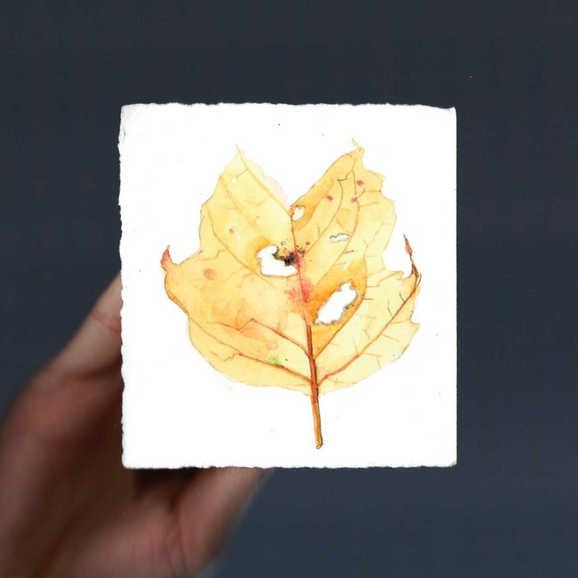 """""""Tulip Tree Leaf"""""""