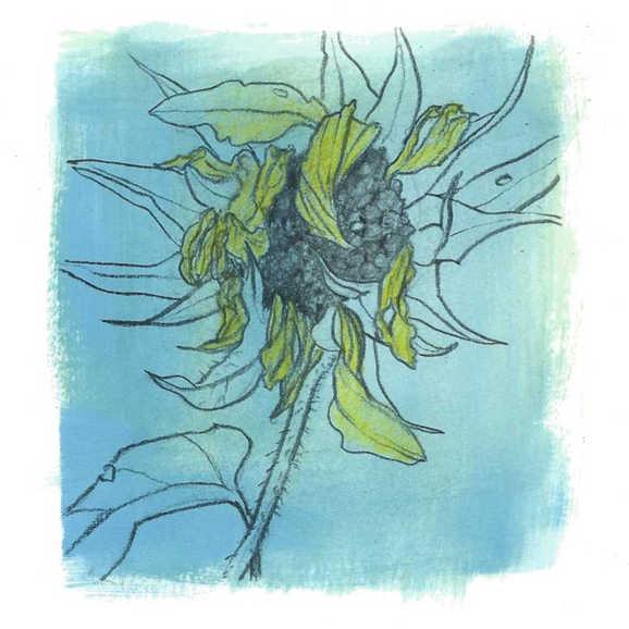 """Sunflower at Season's End"""