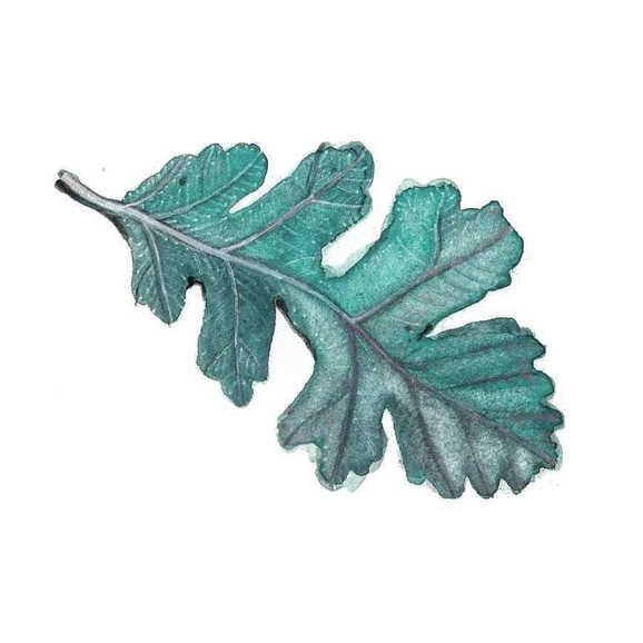 """""""Oak Leaf"""""""